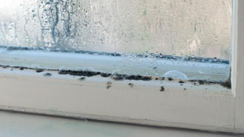 Limpando a casa: 3 truques para se livrar do mofo e do bolor