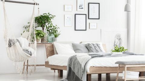Plantas na decoração: 5 melhores tipos