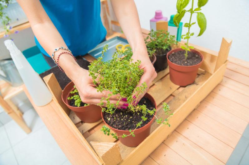 Aprenda como montar uma horta em casa gastando pouco